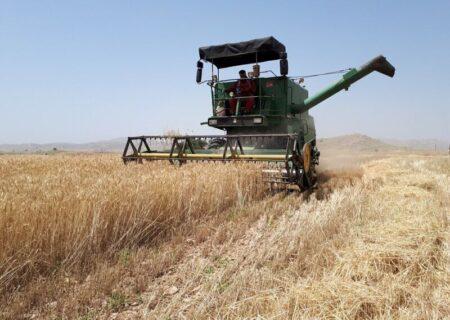 آغاز برداشت گندم از مزارع لالی/پیش بینی برداشت ۵ هزار تن گندم از مزارع شهرستان