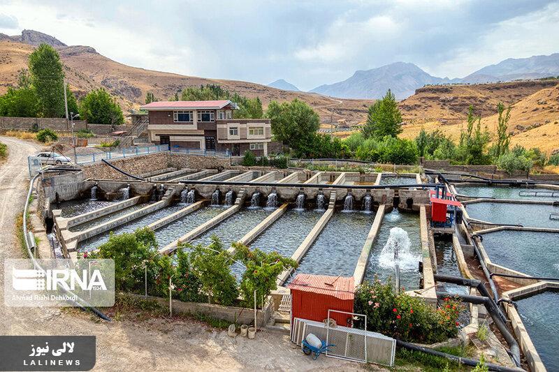 چهار محال و بختیاری، قطب تولید ماهی سردابی کشور