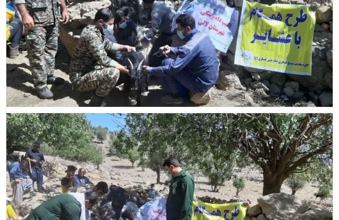 واکسیناسیون رایگان ۲۵ هزار دام عشایر در مناطق عشایری و کوهستانی شهرستان لالی