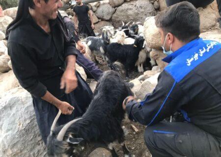 واکسیناسیون ۳۸۰۰ راس دام سبک توسط اکیپ دامپزشکی در مناطق صعب العبور لالی